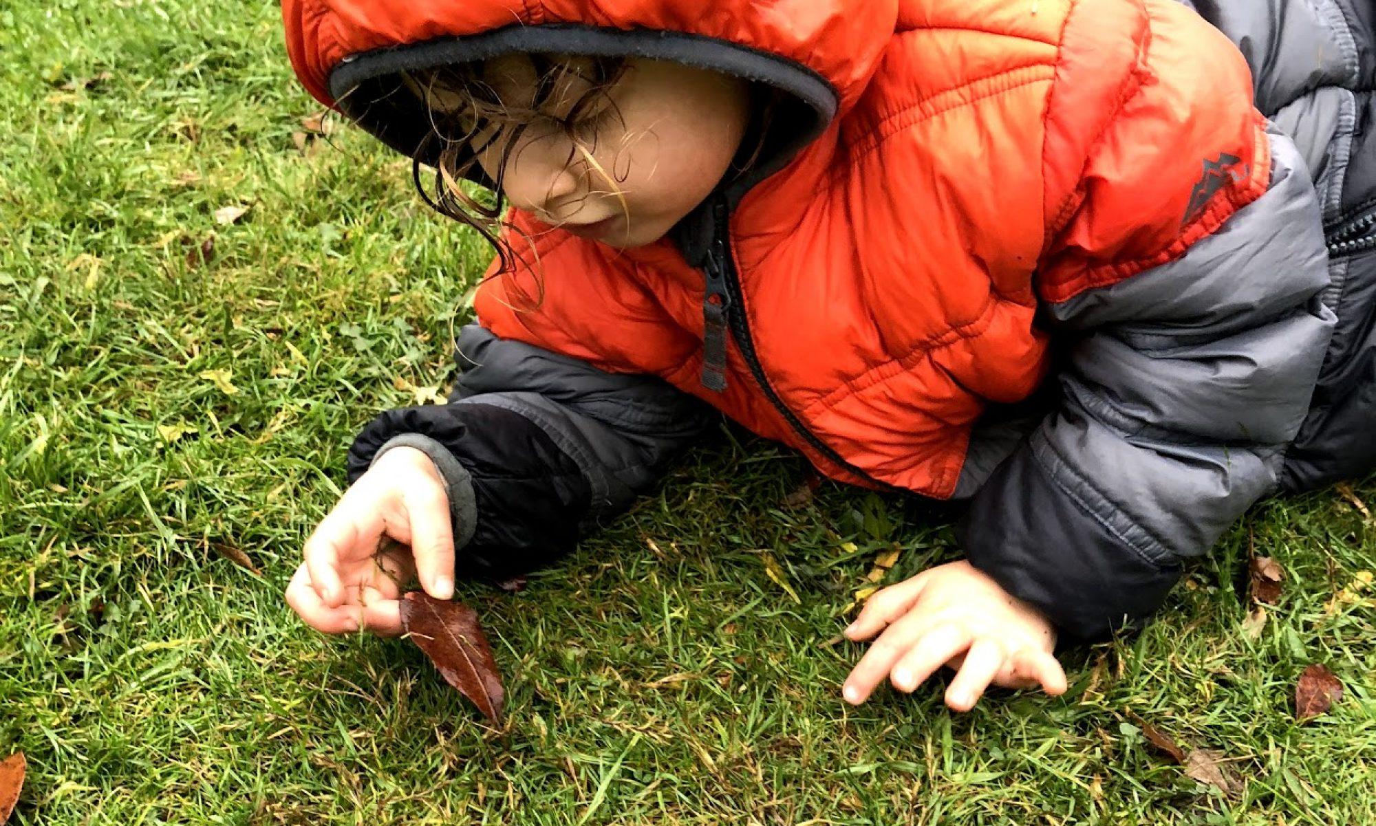 Wild Pear Preschool