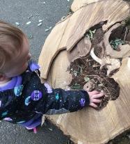stump explore